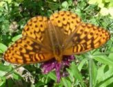 Beautiful butterfly sipping on nectar