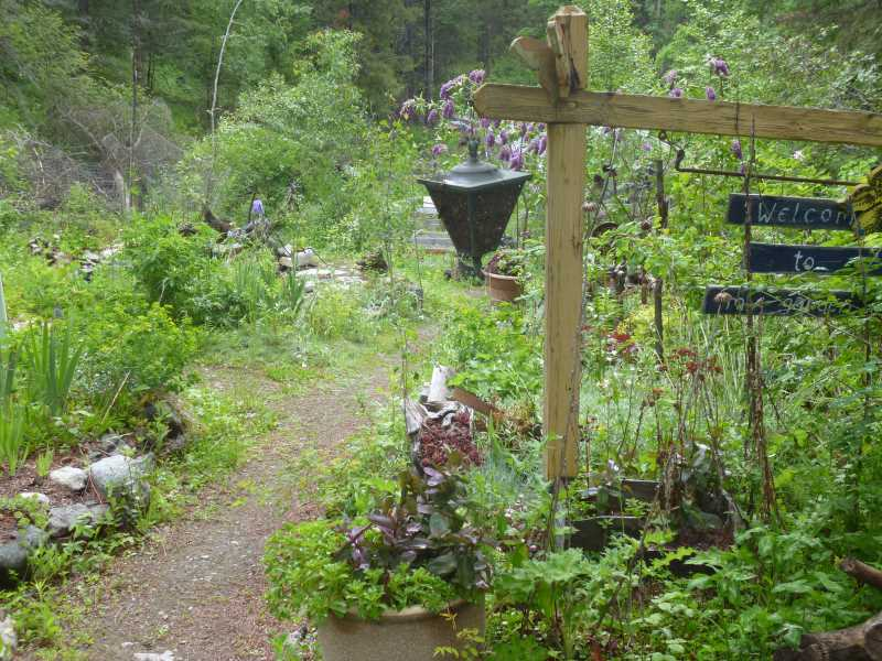 The Xeric Garden path - unusually lush this year