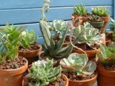 Terracotta Clay Pots are perfect for growing house plants