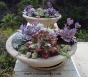 Winterizing Succulents E-Course - click here to sign up...