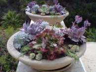 Sign up for the Winterizing Succulents E-Course - it's free!
