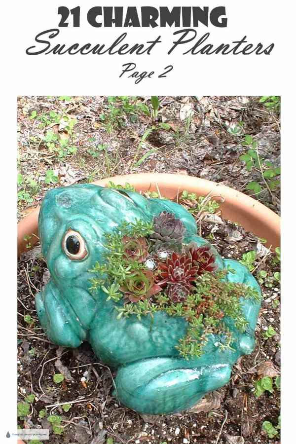 21 Charming Succulent Planters Page 2
