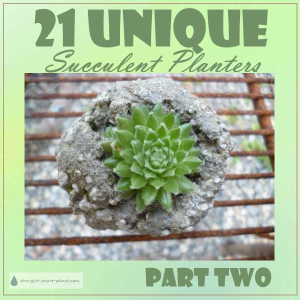 21 Unique Succulent Planters; odd and unusual ways to grow succulent plants...page two