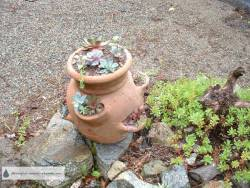 Strawberry Pot in 2006