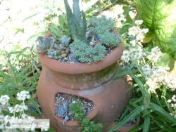 Strawberry Pot 2007