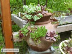 2013 has a new incarnation, with hardy succulents this time...