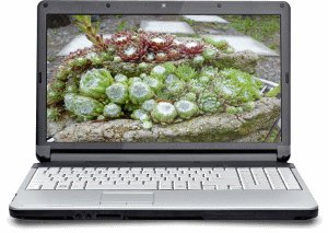 The Succulent Plant Business E-Course