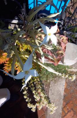 4 petal white star flower 4 petal white star mightylinksfo