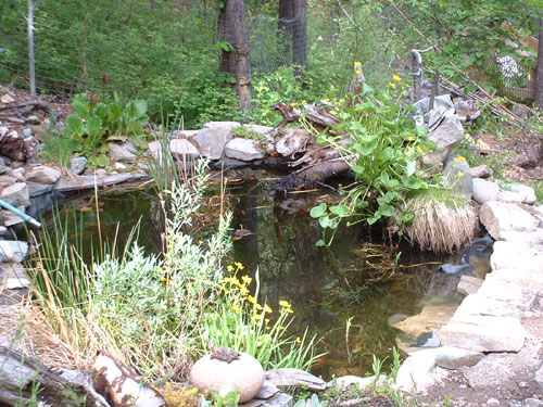 Garden Pond for all the tiny creatures in your garden...