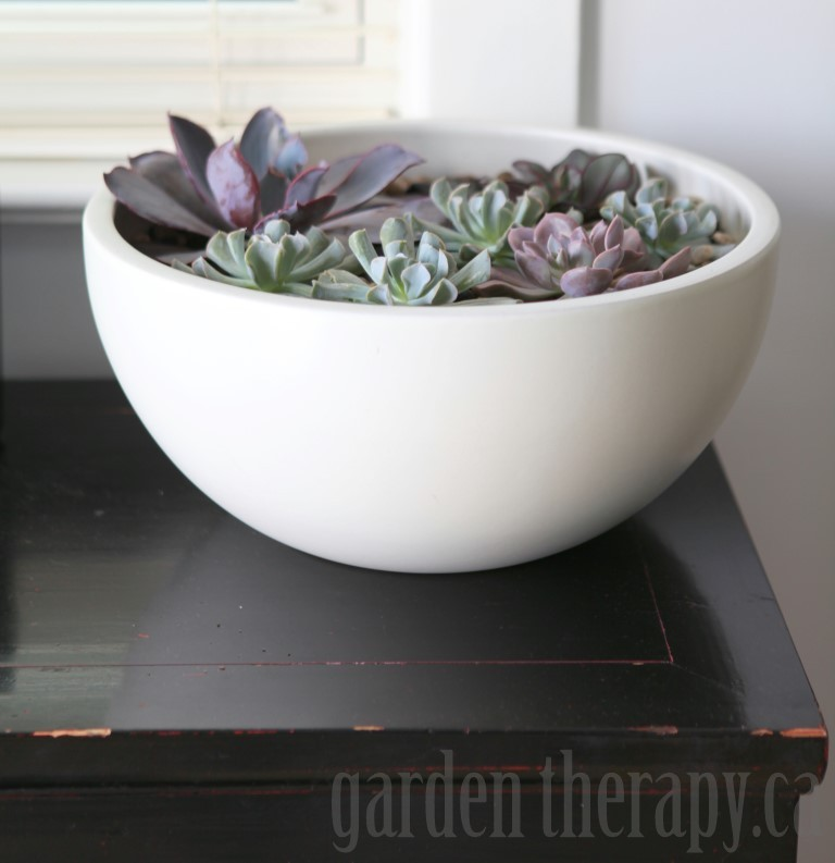 A sleek and modern variation on the succulent planter...