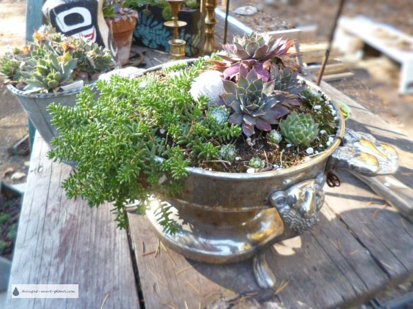 Recycled Chafing Dish made into a succulent planter