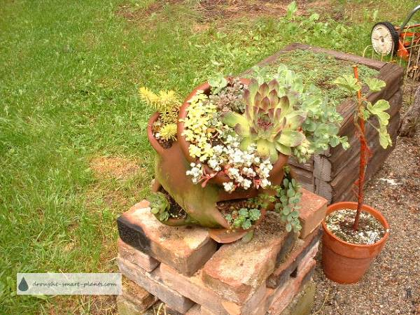 Strawberry Pot 2010