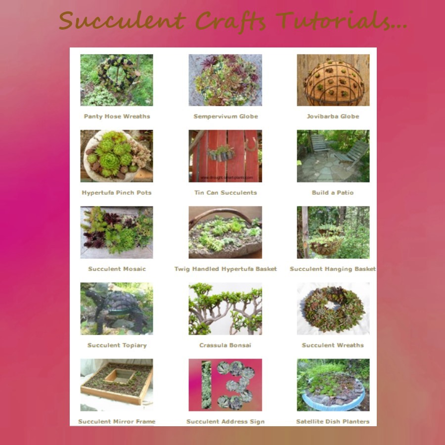 Succulent Crafts Tutorials from Xeria