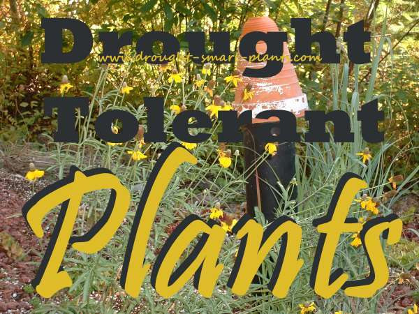 Drought Tolerant  Plants - tough and beautiful...