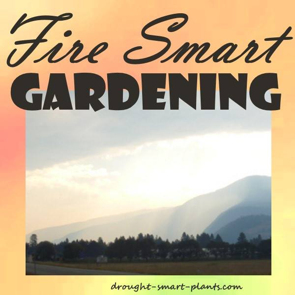 Reduce the Risk of Wildfires in your landscaping