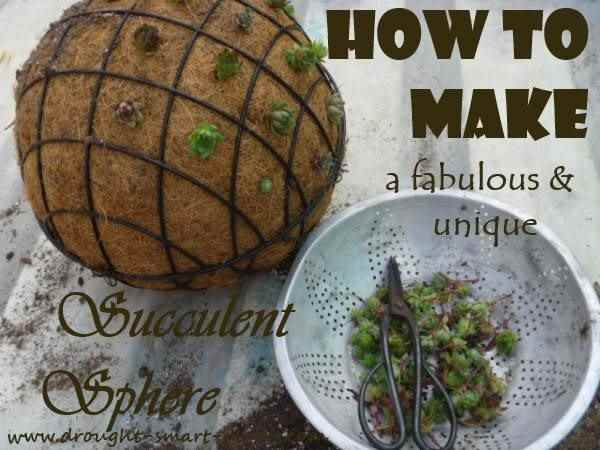 How to Make a Fabulous, Unique Succulent Sphere