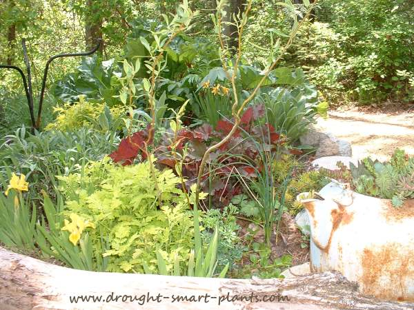 Lush and healthy, these plants never get any supplemental irrigation...