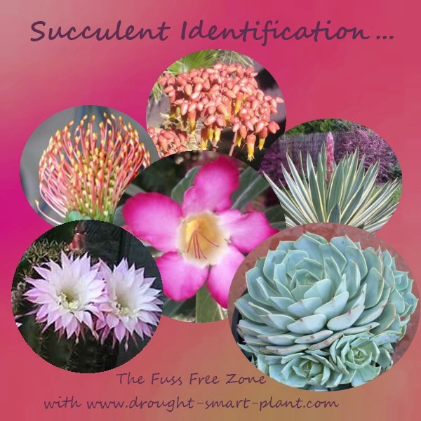 Succulent Identification - important?  Oh yeah!