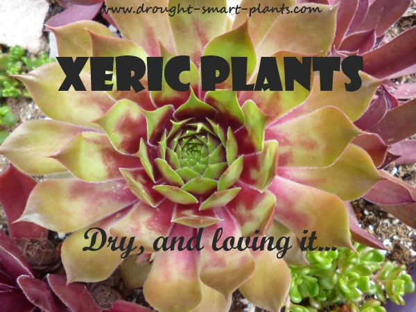 Xeric Plants; Dry, and loving it...