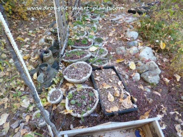 Overwintering Hypertufa - find out more here