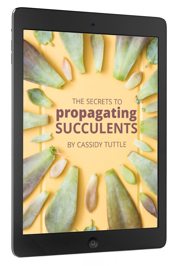 Succulents and Sunshine Secrets to Propagating Succulents E-Book