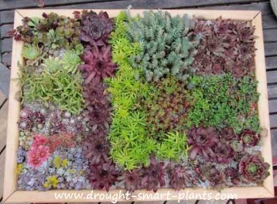 Walls, mosaics and frames; all perfect ways to use succulents