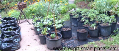 Container Garden Using Bags, Nursery Pots And Salvage