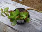 find out more about Succulent Plant Propagation