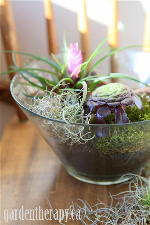 Salad Bowl Terrarium from Garden Therapy