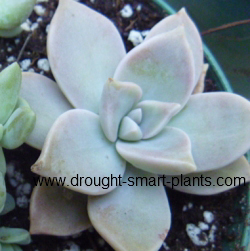 succulent plants miscellaneous varied short tall