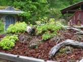 Xeric Gardens & Green Roofs