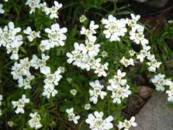 Groundcovers For Xeriscaping Low Growing Plants For Dry Gardens