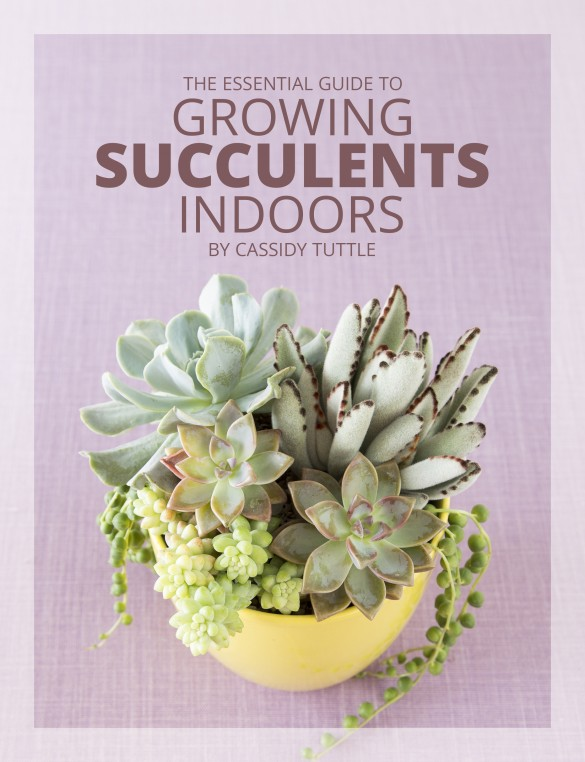 Growing Succulents Indoors is Tricky...