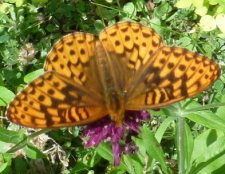 click to see the Butterfly Garden