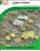 Propagate Lithops easily from seed - find out here