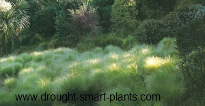 Grasses make perfect Rain Garden plants