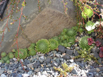 clustering plants sheltering at the base of rocks