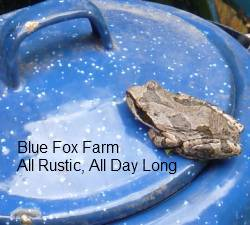 see more Hypertufa Projects on Blue Fox Farm