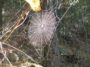 Spider web in late fall