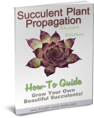 Buy the Succulent Plant Propagation E-Book today..