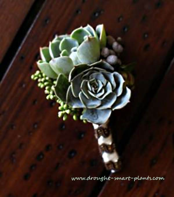 Succulent Wedding Bouquet - flowers that aren\'t flowers at all