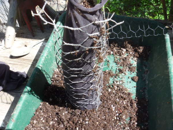 filling the legs with potting soi