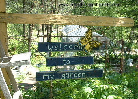 Welcome to my Garden...