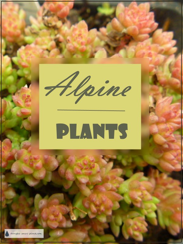 Alpine Plants
