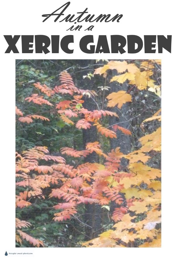 Autumn in the Xeric Garden...