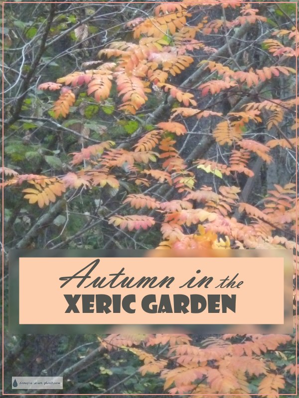 Autumn In The Xeric Garden.