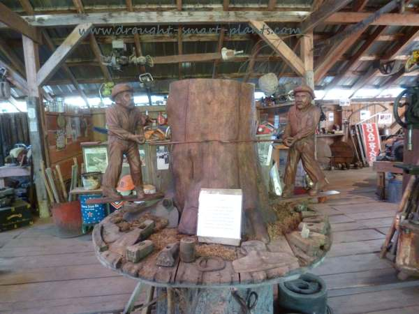 The logging museum