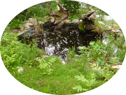 An eco-system pond attracts wildlife and birds