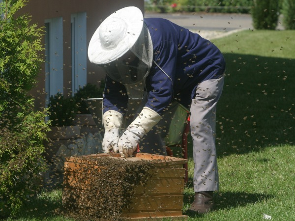 Bee Keeping, one of Andrews favorite hobbies