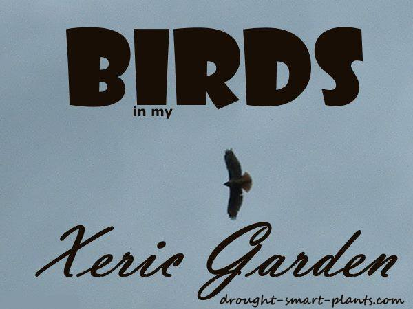 Birds in my Xeric Garden